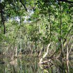 Vườn quốc gia Cát Bà hấp dẫn du lịch khám phá