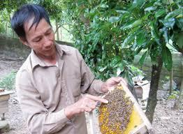 Nuôi ong lấy mật đã trở thành nghề xóa đói giảm nghèo ở Cát Hải
