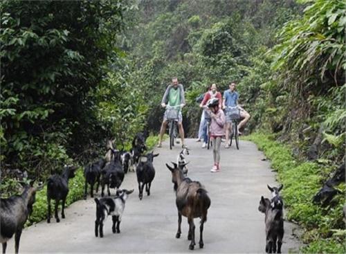 Ghé thăm làng Việt Hải Cát Bà