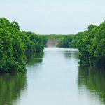 Đi Cát bà khám phá rừng ngập mặn Phù Long